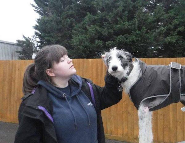 local dog boarding kennels