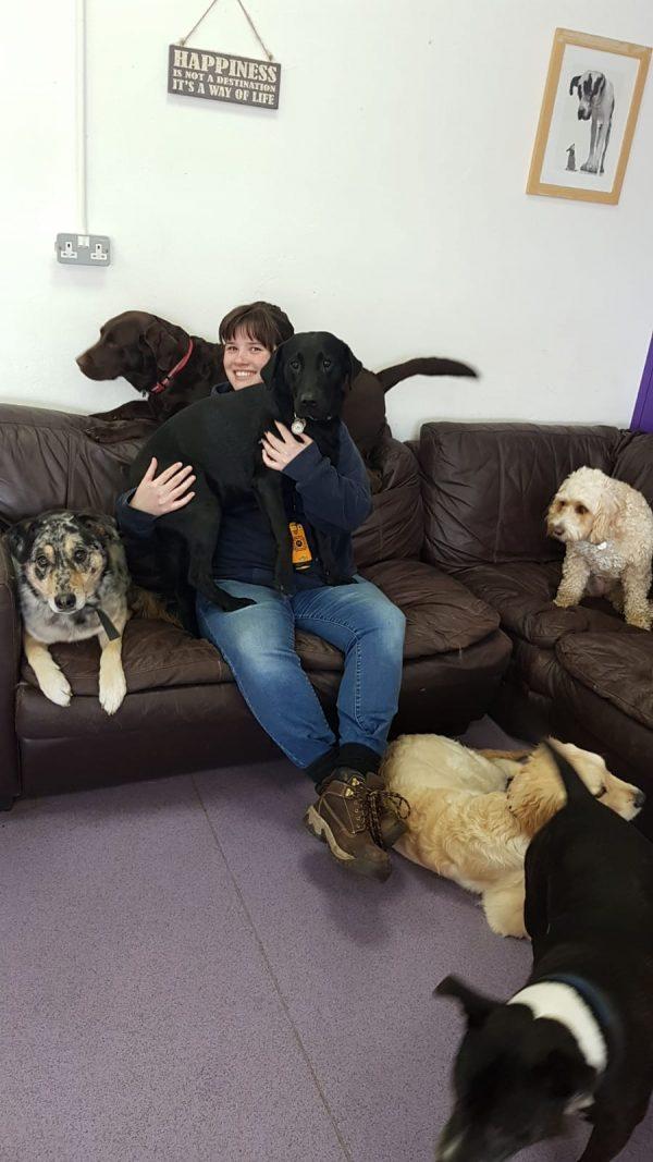 happi days dog day care