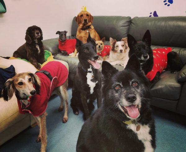 dog day care martlesham