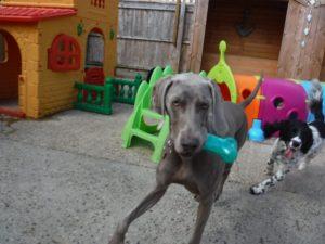 local dog boarding