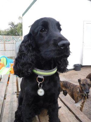 dog day care bury st edmunds