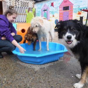 dog day care suffolk