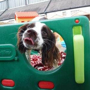 dog day care martlesham