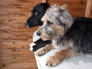 dog daycare woodbridge