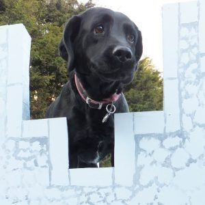 dog boarding suffolk county