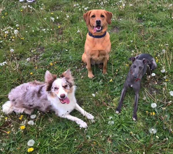dog boarding kennels essex