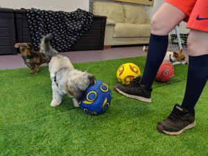 dog day care ipswich