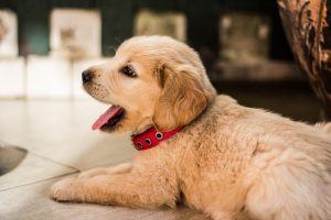 Popular dog names and puppy names! Inspiration from Happi Days Dog Day Care