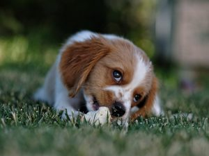 Popular Puppy Names - A Guide from Happi Days Dog Day Care