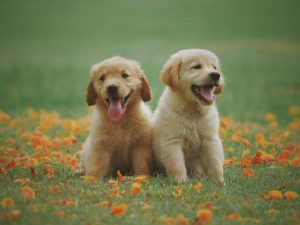 Popular Dog Names for your cute puppy! Happi Days Dog Day Care