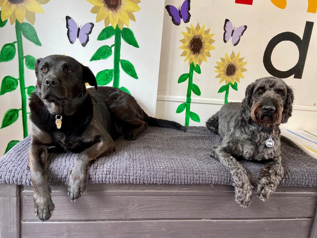 A Day In The Life of a Dog - Happi Days Dog Day Care in Suffolk