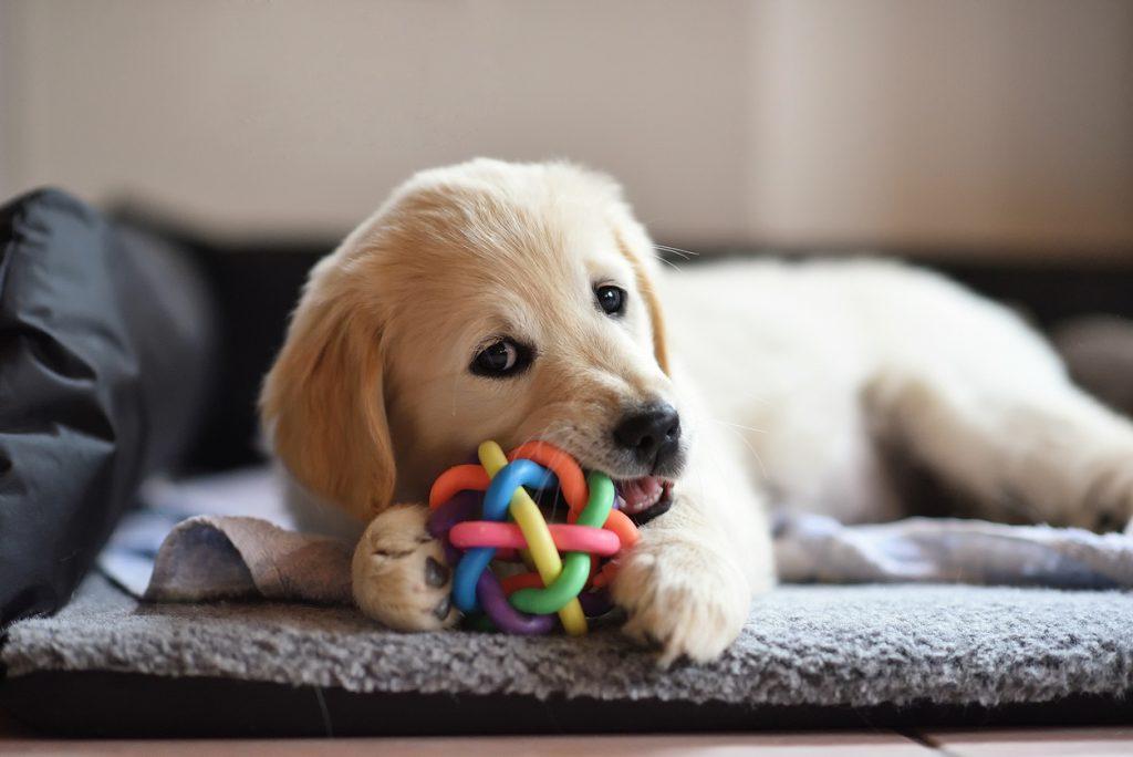 Dog Sensory - benefits of a sensory garden for dogs