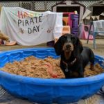 Pirate Day at Happi Days Dog Day Care