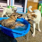 Keeping Your Dog Cool During the Summer Months