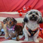 Valentine's Day at Happi Days Dog Day Care