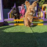 Luxury Dog Care