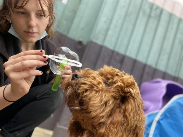 Ella Hamilton-Wright - Happi Days Dog Day Care team