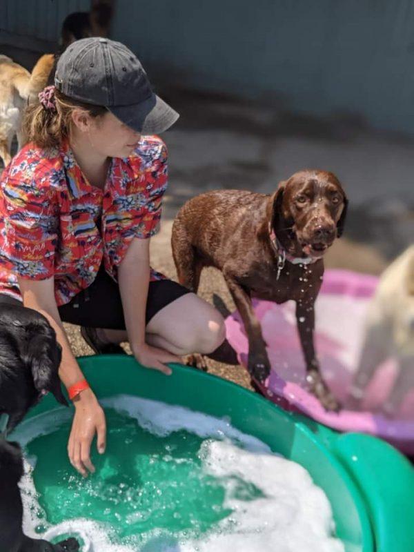 Amber Hanys - Happi Days Dog Day Care team