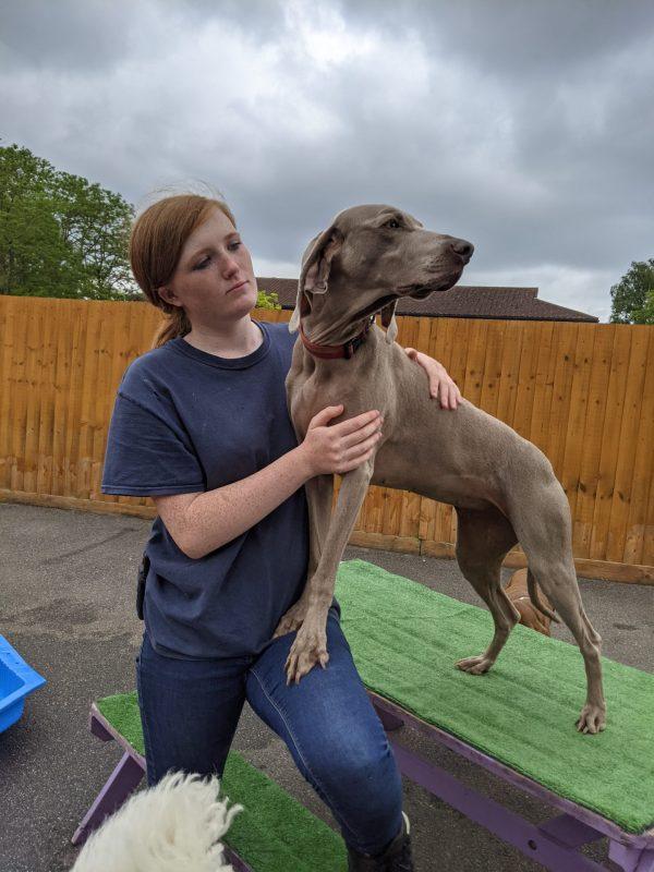Danica Wilson - Happi Days Dog Day Care team